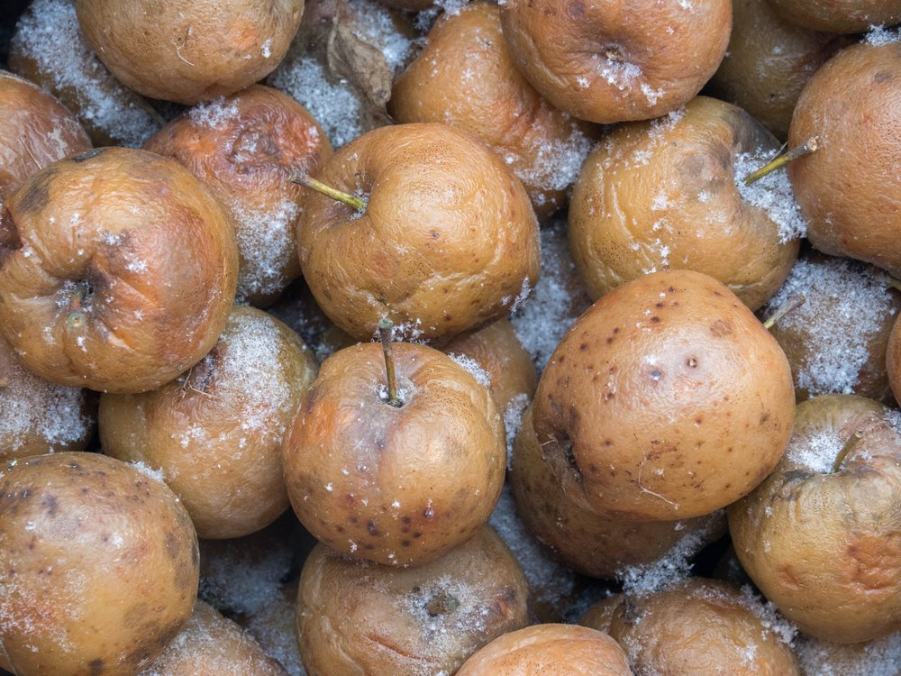 Can Dogs Eat Dried, Frozen Or Baked Apples?