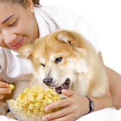 dogs eat popcorn