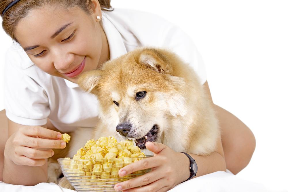 Can Dogs Eat Plain Popcorn