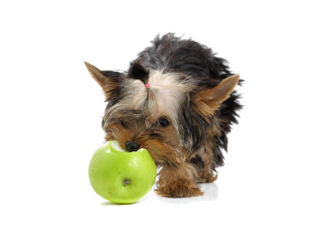 Eating Apple Cores Can Cause Choking Hazards