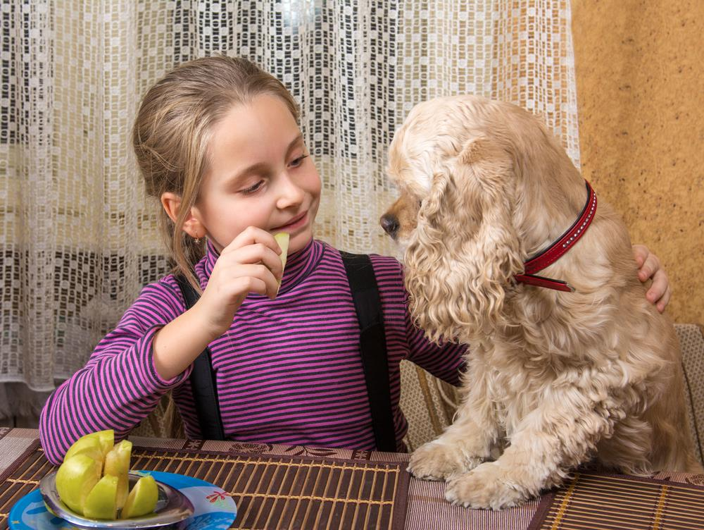 Things to look for while serving Apples to your Dog