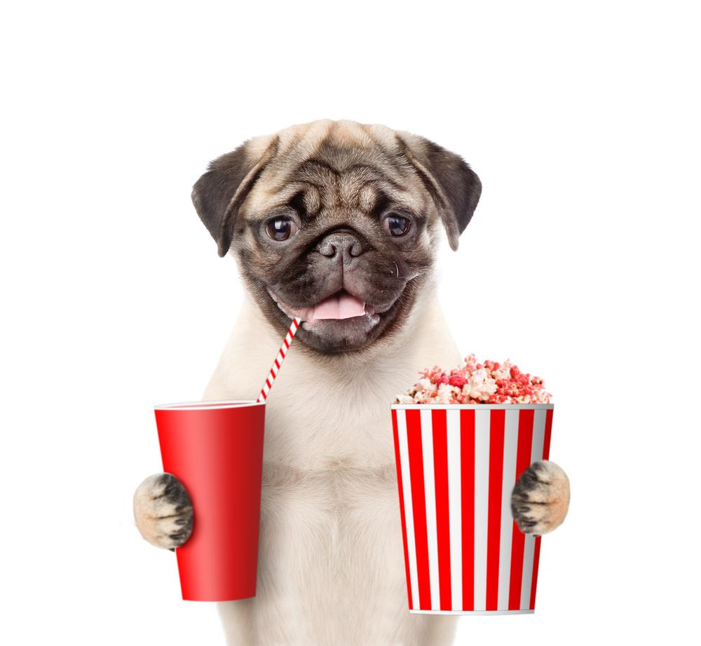 Why Can't Dogs Eat Popcorn