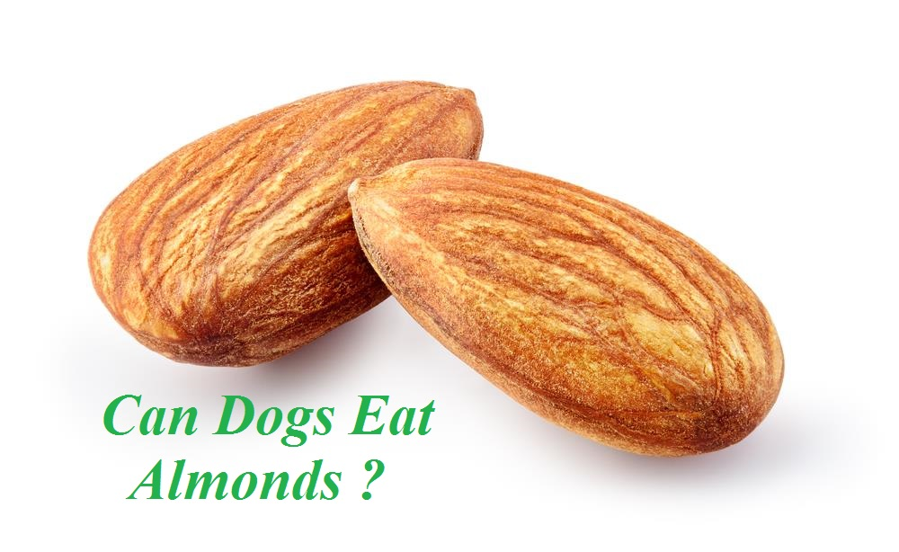 Can Dogs Eat Any Kind Of Nuts