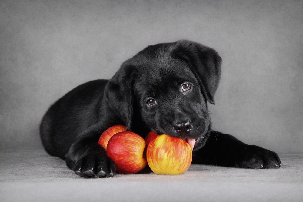 Can Dogs Eat All Kinds Of Apples