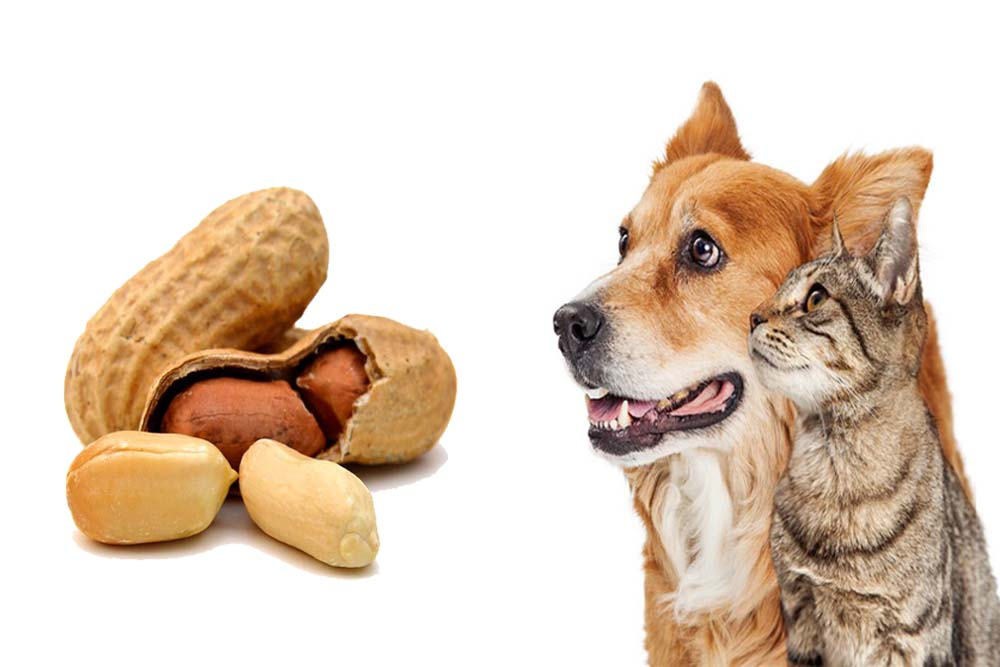 Can Dogs Eat Peanuts