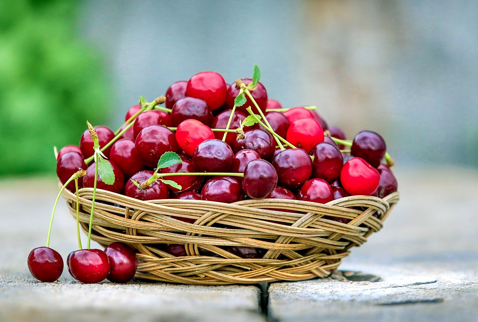 Are Cherries OK For Dogs To Eat