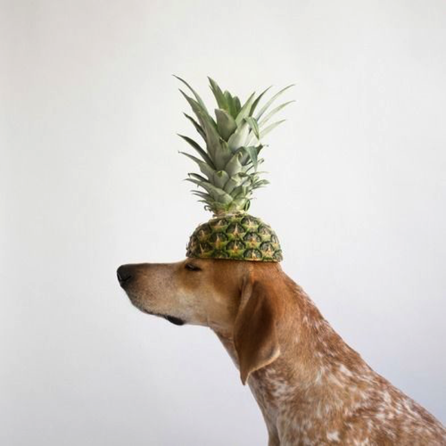 Can Dogs Eat Raw Pineapple