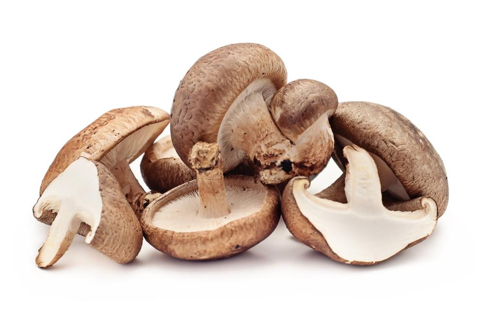 What Kind Of Mushrooms Can Dogs Eat