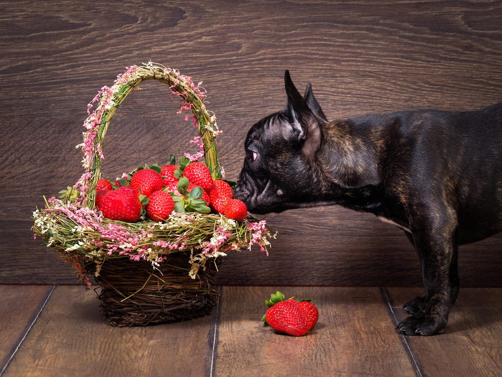 When Are Strawberries Bad For Dogs