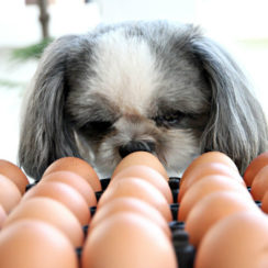 can dogs eat raw eggs