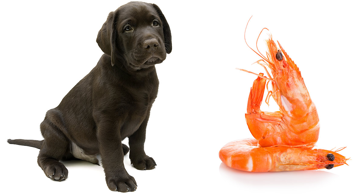Can Dogs Eat Unpeeled Shrimp?