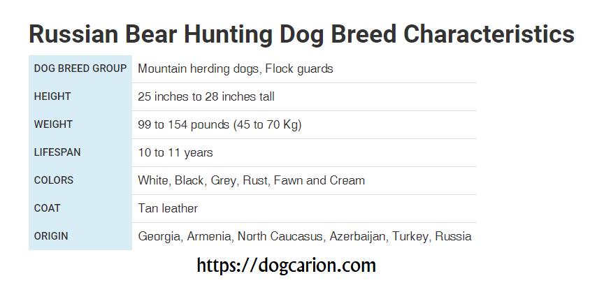 Russian Bear Dog Size.