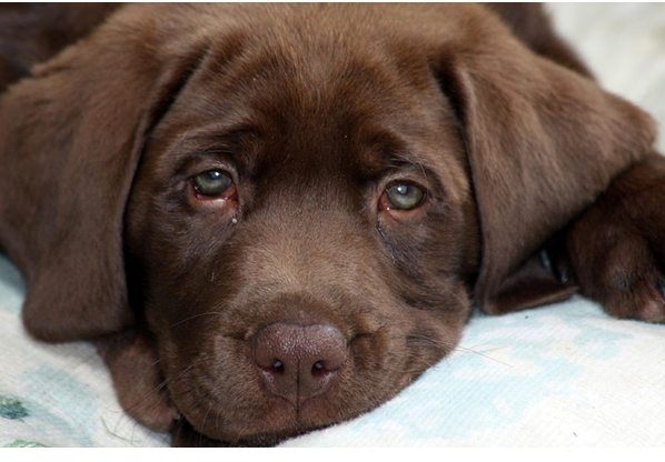 How To Tell Your Dog Is Having Trouble